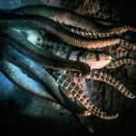 Octopus Dream Interpretation
