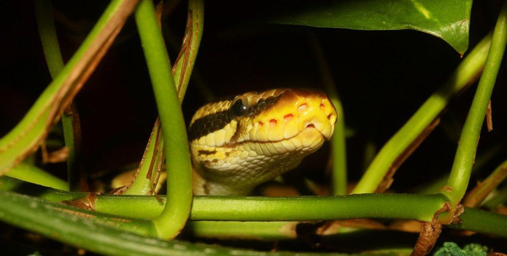 snakes symbol in dreams