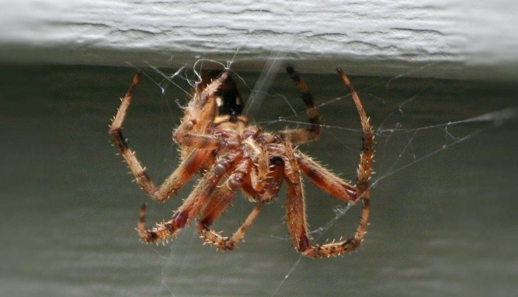 dream of spider biting someone else