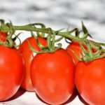 Red Green Tomatoes Dream Interpretation