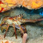 Lobster Dream Interpretation