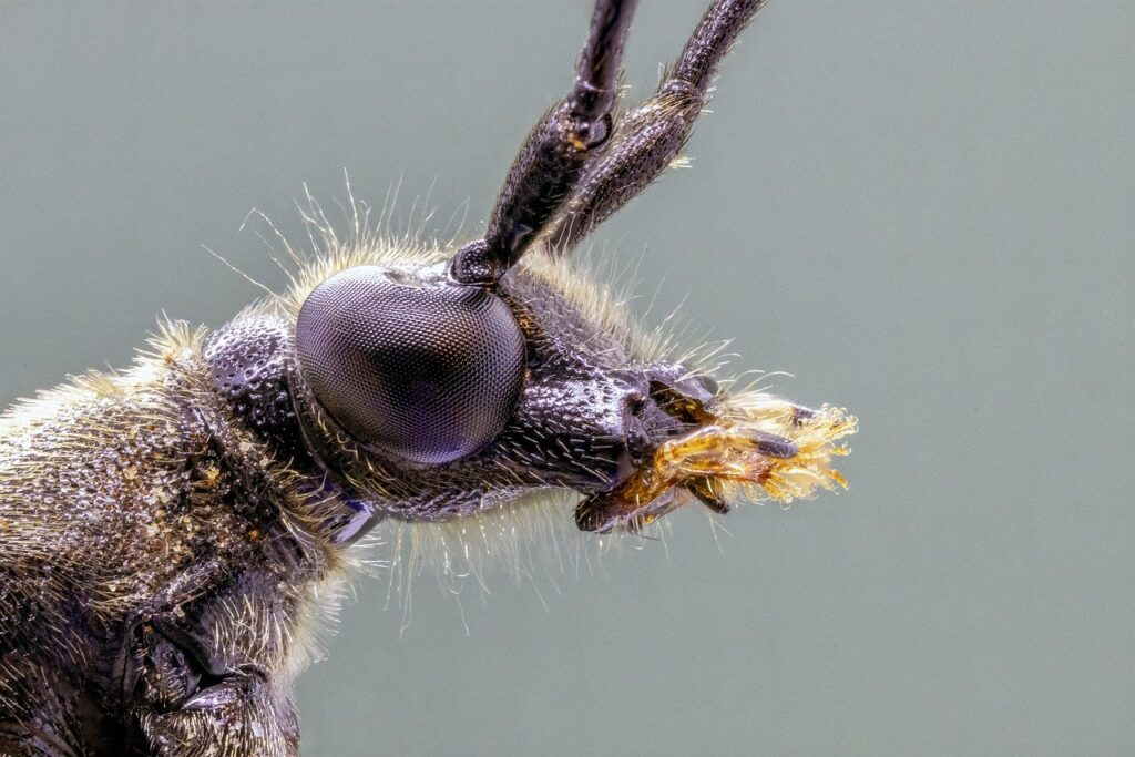 Insects Dream Interpretation