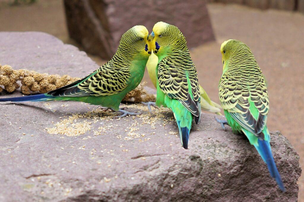 Parakeet Dream Interpretation