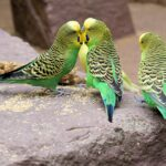 Parakeet Dream Interpretation