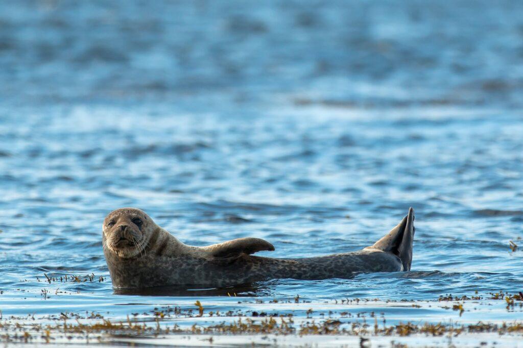 Seal Dream Interpretation