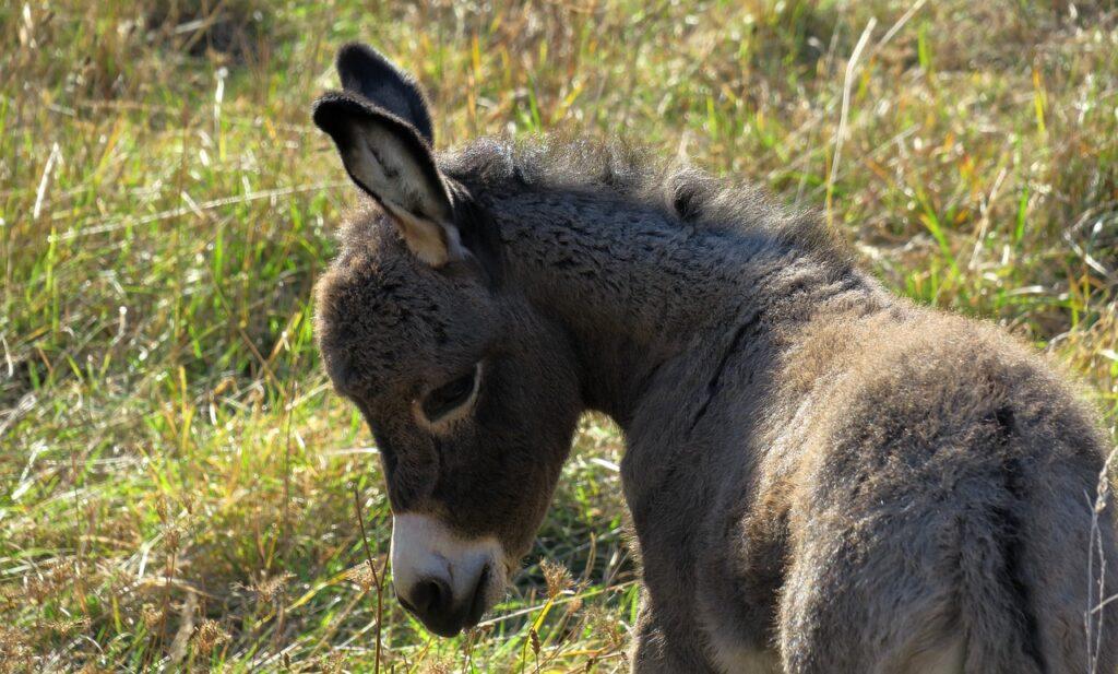 Donkey Dream Interpretation