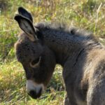 Donkey Dream Interpretation