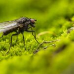 Flies Dream Interpretation