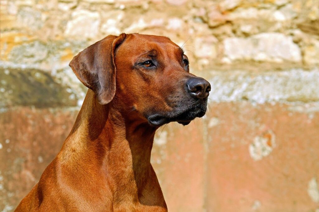 Brown Dog Dream Interpretation