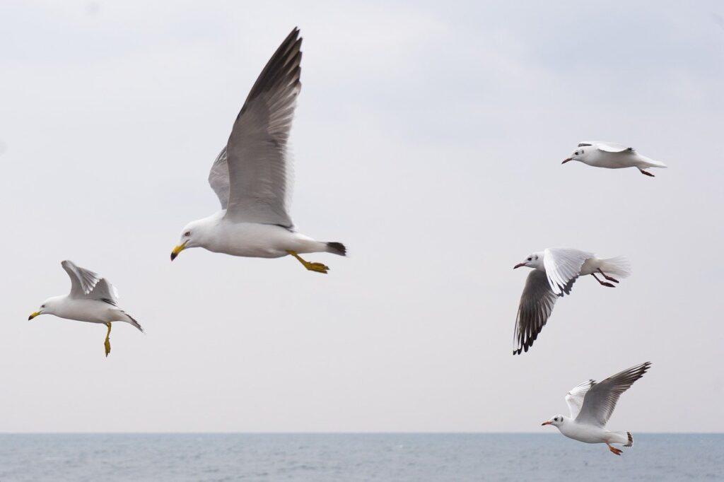 Seagull Dream Interpretation