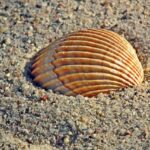 Shellfish Dream Interpretation