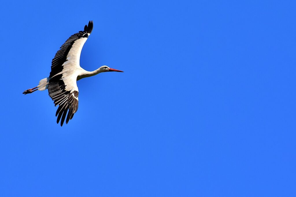 Stork Dream Interpretation