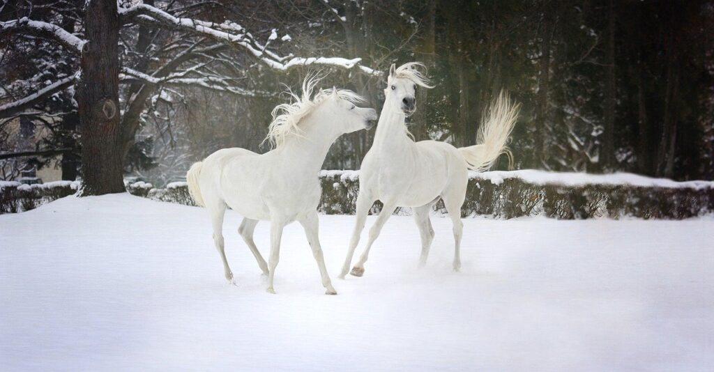 Dream Interpretation Of White Horse