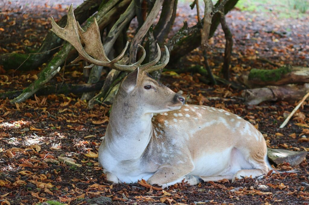 Deer Dream Interpretation