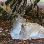 Deer Dream Interpretation