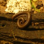 Millipede Dream Interpretation