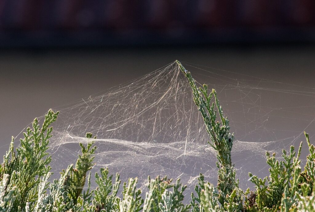 Cobwebs Dream Interpretation