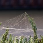 Cobwebs Dream Interpretation