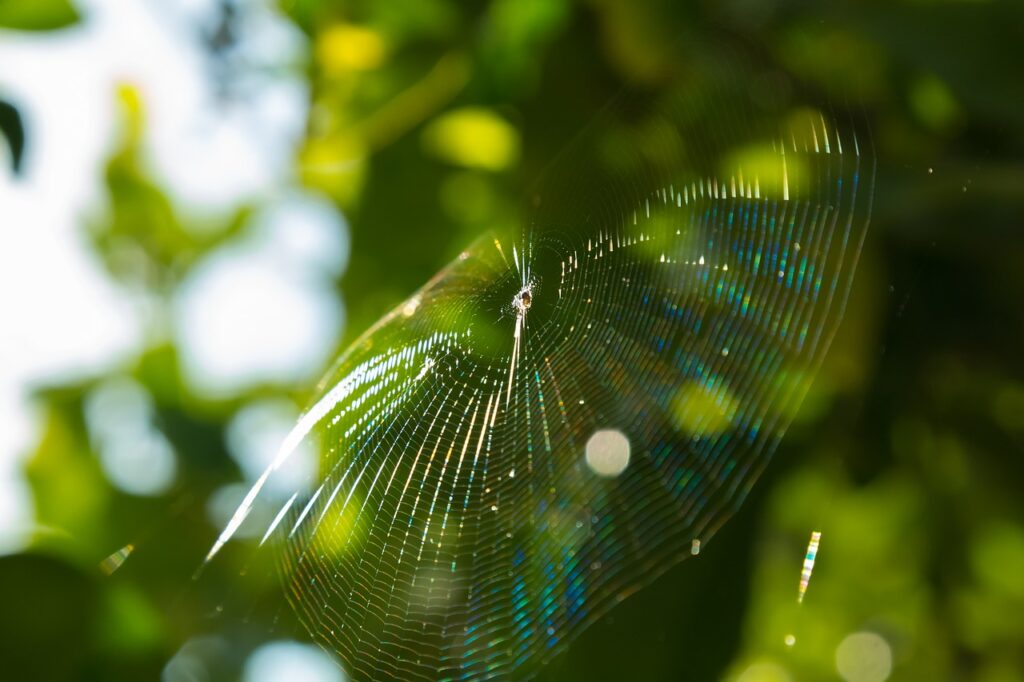 spider web Dream Interpretation