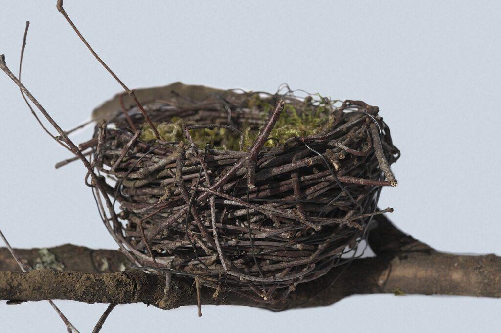 Bird Nest Dream Interpretation
