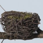 Bird Nest Dream Interpretation