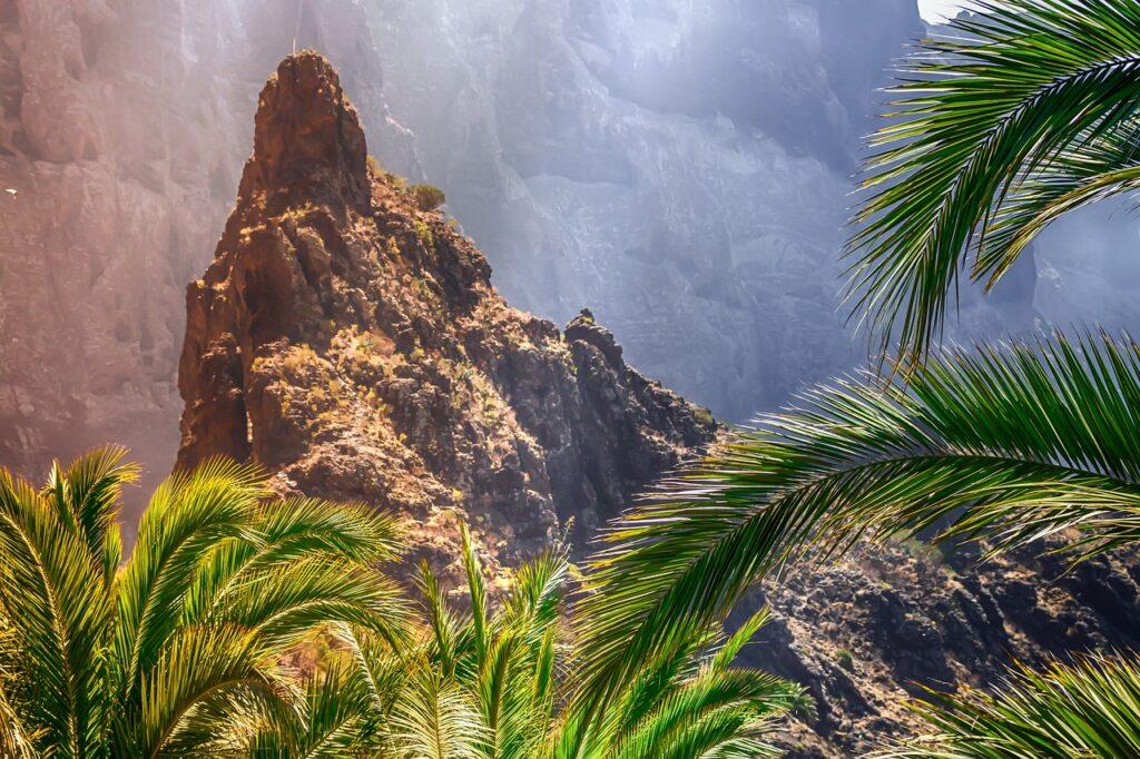 Palm Tree Dream Interpretation