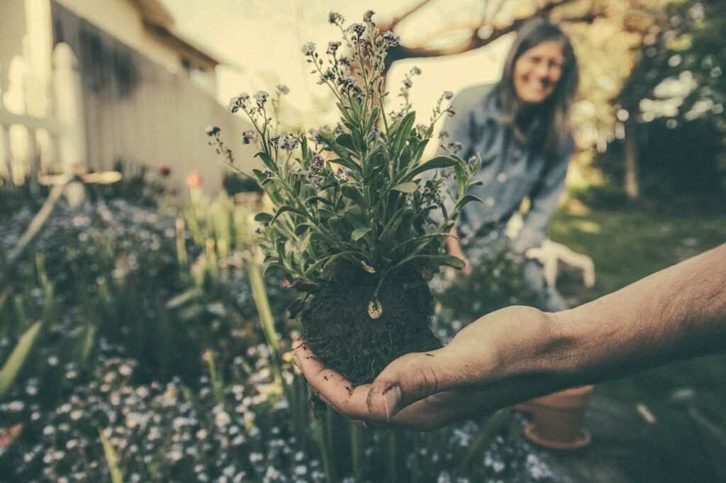 Planting Dream Interpretation
