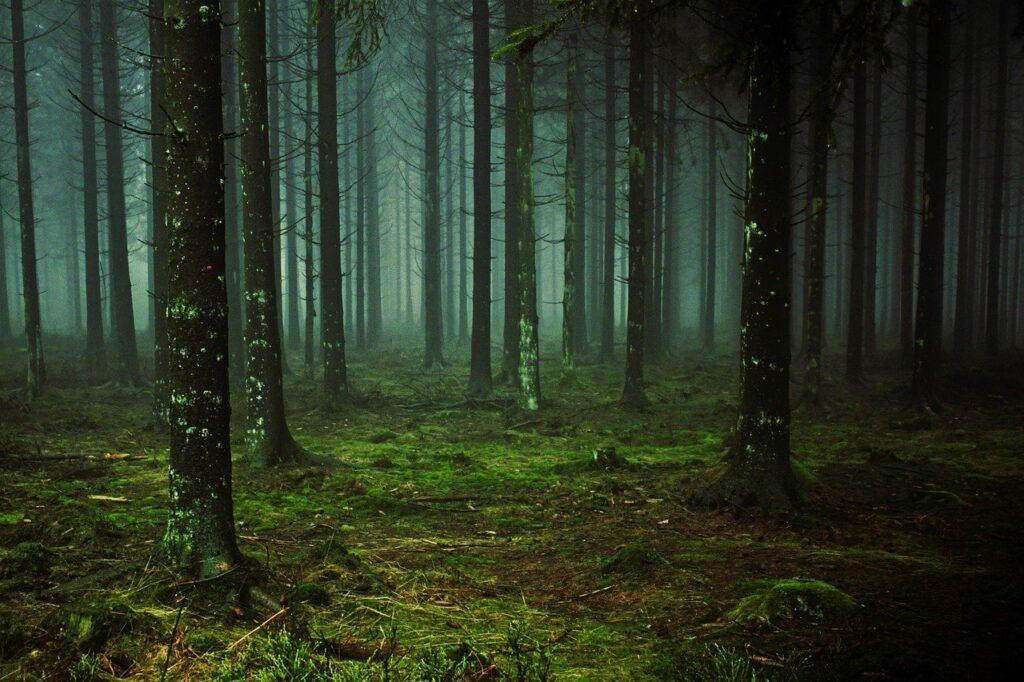 Pine Tree Dream Interpretation