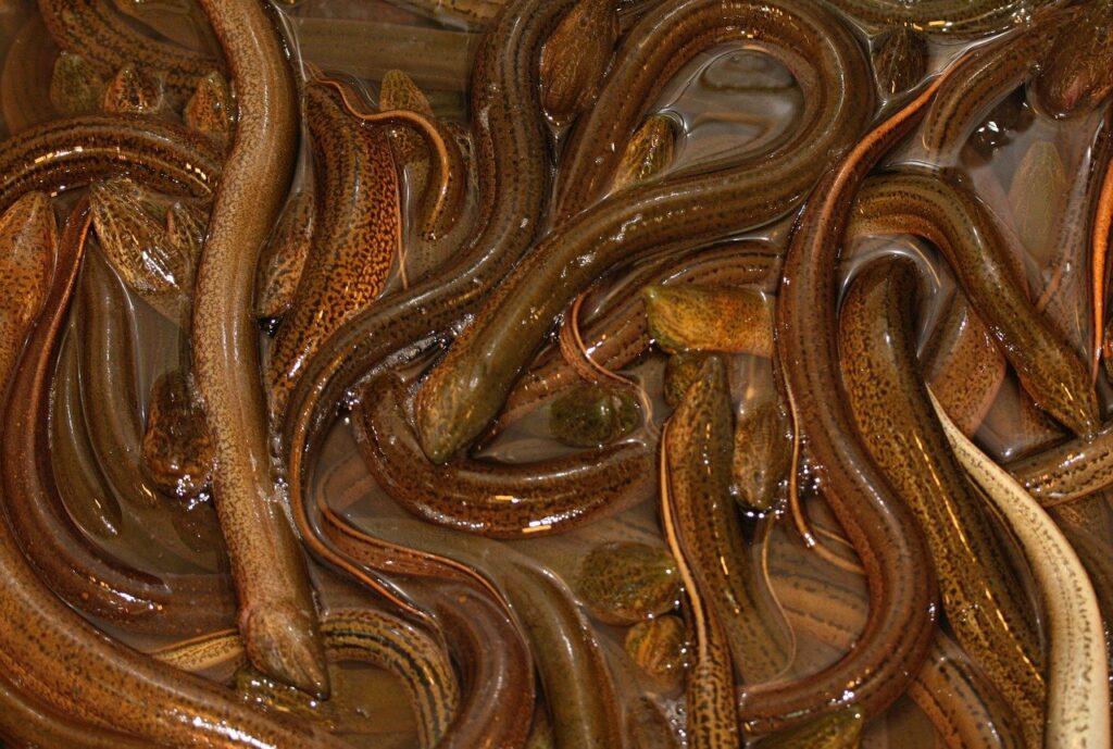 Eel Dream Interpretation